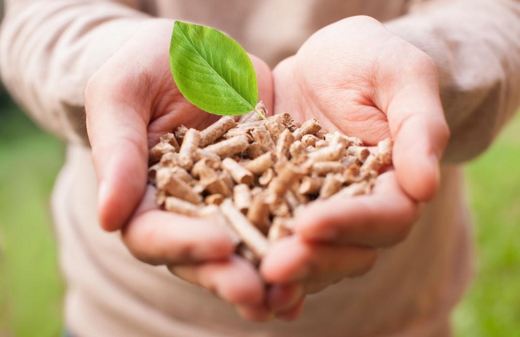 Biomasse : l'essentiel à retenir